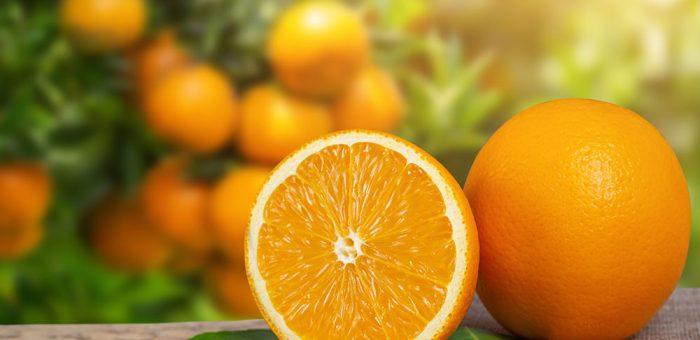 Top 5 giống cam nên trồng tại Việt Nam