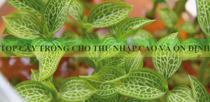 Top 7 loại cây trồng cho hiệu quả kinh tế cao và năng suất tốt